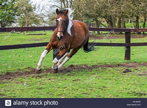 horse corral stock photos horse corral stock images alamy horse corral stock photos horse corral stock images alamy