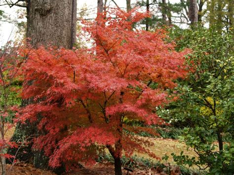 color your landscape every fall east texas gardening