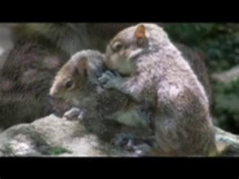 all about love squirrels amongst us on vimeo