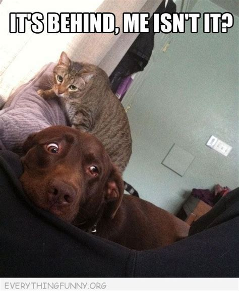 cat scares dog on couch funny caption cat behind scared dog it s behind me isn t