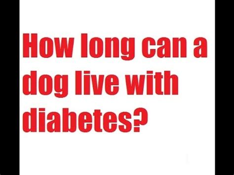 how can dogs live how can a live with diabetes