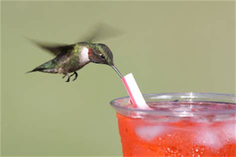 steve byland nature photography attract hummingbirds to