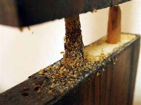 bed bug inspection nyc 98 best images about bed bug fix on pinterest stains