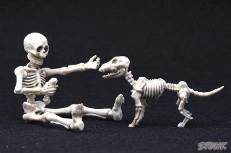 Re Ment Pose Skeleton 28 best re ment pose skeleton images on skeletons skulls and pose