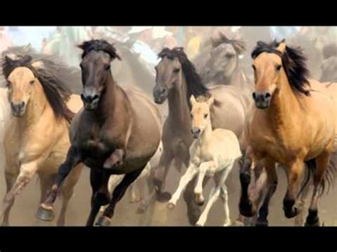 pferde maschinen oder mustangs youtube