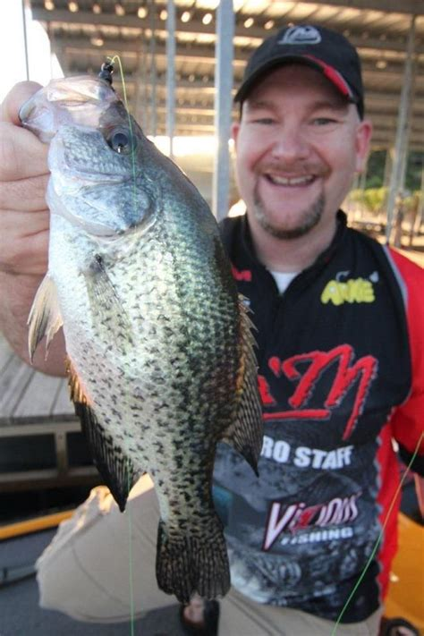 pin  brad wiegmann  crappie fishing crappie fishing