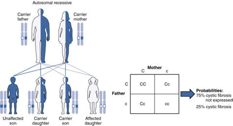 pattern formation genetics definition dominant vs recessive difference and comparison diffen