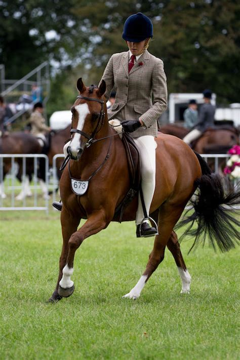 Ah Hoy Ride A Pony Theitlistscom by Wednesday S Rising Nz Pony
