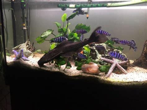aquarien fische kaufen aquarien fische gebraucht dhdcom