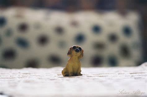 lonely puppy lonely puppy by mcmxvii on deviantart