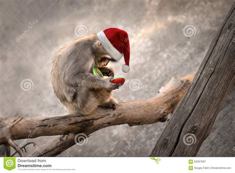 monkey santa monkey santa phone stock photo image 63367697