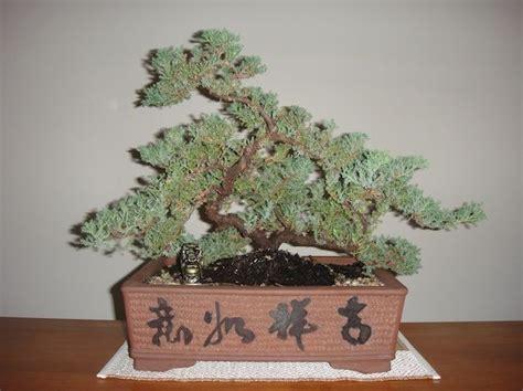 bonsai secrets designing growing 0762106247 17 best images about bonsai on trees hiroshima bombing and bonsai trees