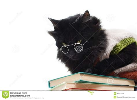 Cat With Glasses Black black cat with glasses stock photo image 45222503