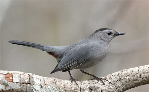 Small Grey Parable About A Small Grey Bird