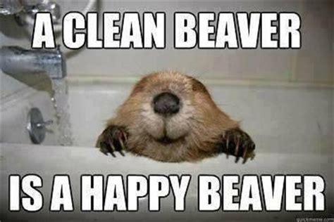 Beaver Meme - 11609170446 d93397e5b0 jpg