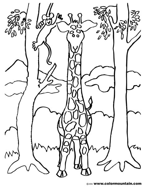 giraffe eating coloring pages giraffe and two trees coloring page create a printout or