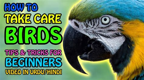 how to take care of birds parrot care tips tricks