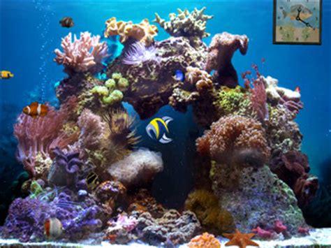 beautiful reef :: 3d aquarium animated desktop wallpapers