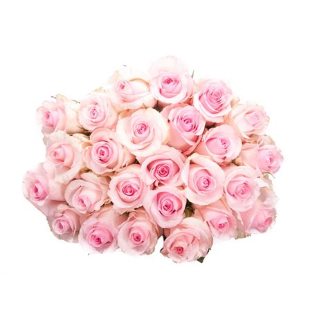 pink roses for valentines day valentine s day two dozen light pink roses flower muse