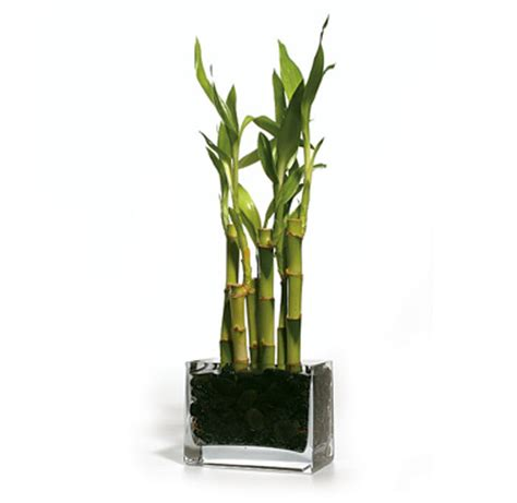 Small Plant For Office Desk Best Plant For My Office Desk Anandtech Forums