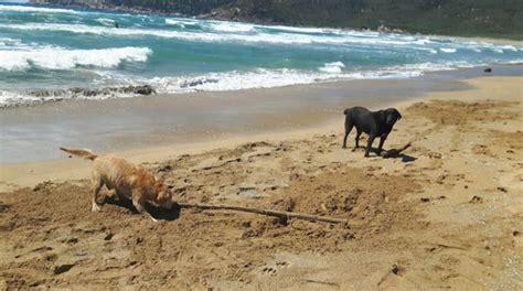porto ferro alghero spiaggia per cani porto ferro alghero