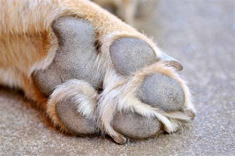 paw pads my best product for paw care a s day special offer bark and swagger