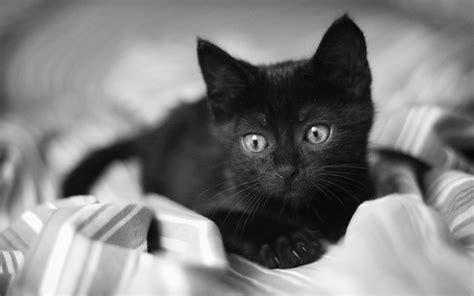 cute cats  cute cats
