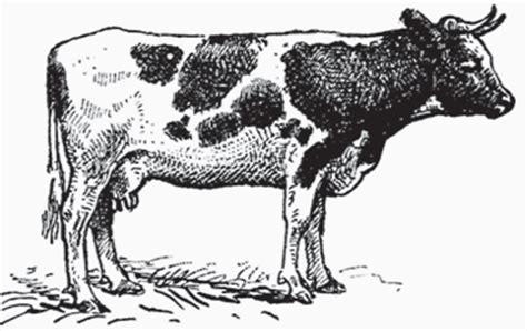 imagenes de vacas a lapiz observa y opina vacas y toros siaprendes sitio