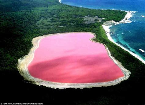 pink lake lake hillier the pink lake in australia 171 twistedsifter