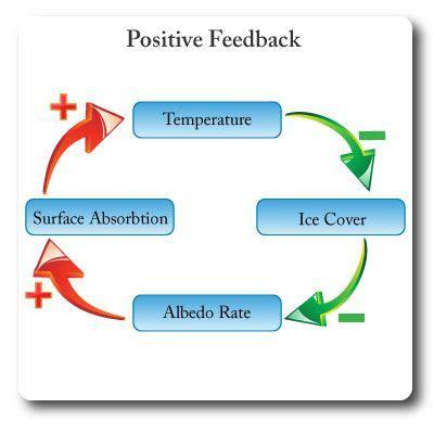 exle of positive feedback ib environmental systems positive feedback environmental systems and societies