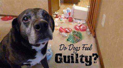 do dogs feel guilt do dogs feel guilty chasing tales