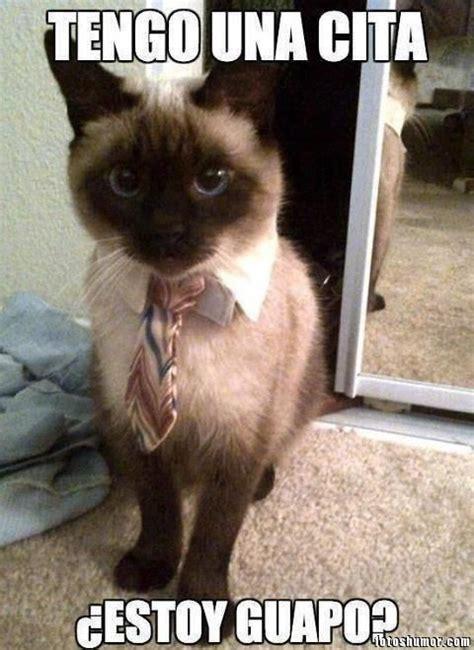 memes de gatos imagenes chistosas