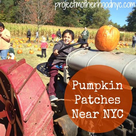 friendly pumpkin patch near me pumpkin patches near nyc secor farms project motherhood