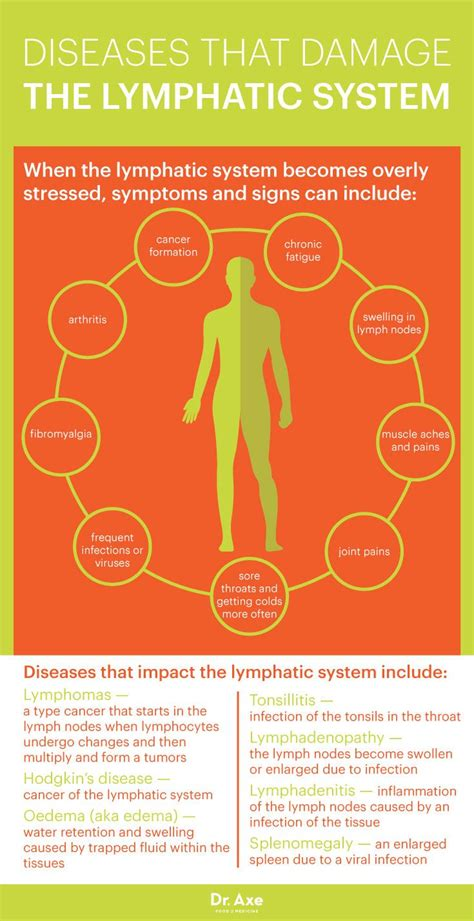 Lymph Detox Diet by Lymphatic System How To Make It Strong Effective