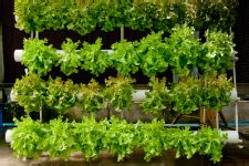 growing hydroponically  pets  gardens