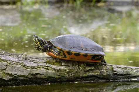 aquatic turtle basking light turtle basking platform buyer s guide petquarters