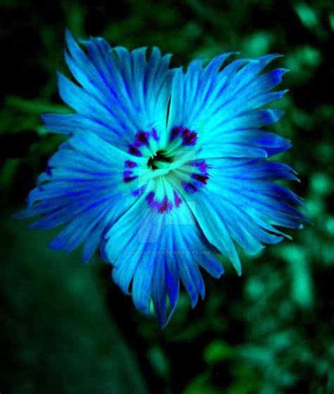 Blue Flowers by Neon Blue Flower By Kawaiikitteh On Deviantart