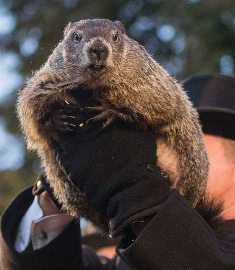 it s like groundhog day meaning what does groundhog day s punxsutawney phil say about