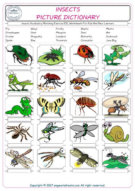 kids bug and insects worksheets insects vocabulary matching exercise esl worksheets for
