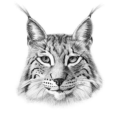 high tops the lynx lynx