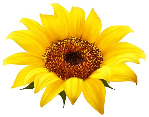 printable sunflower images happy sunflower clipart free clipart images clipartbold