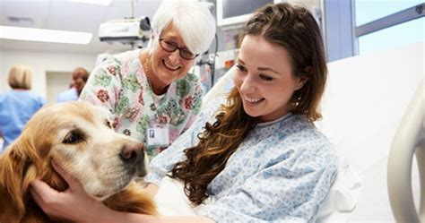 therapy dogs for depression therapy pets and humans with mental health issues dogtime