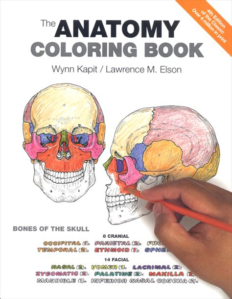 human anatomy coloring book cell coloring pages