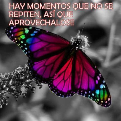 imagenes de mariposas lindas con frases imagenes de mariposas con frases lindas imagui