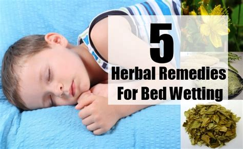top 5 herbal remedies for bed best herbs for bed