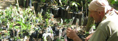 Botanical Gardens Volunteer Botanical Gardens Volunteer Become A Volunteer Toronto Botanical Gardentoronto Botanical