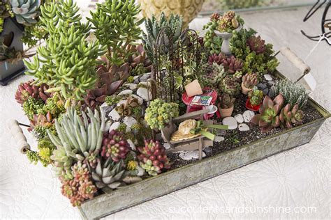 Succulent Container Gardens by Succulent Container Gardening Succulent Garden Design Dzuls Interiors