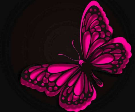 love  pink  black butterfly cool wallpapers