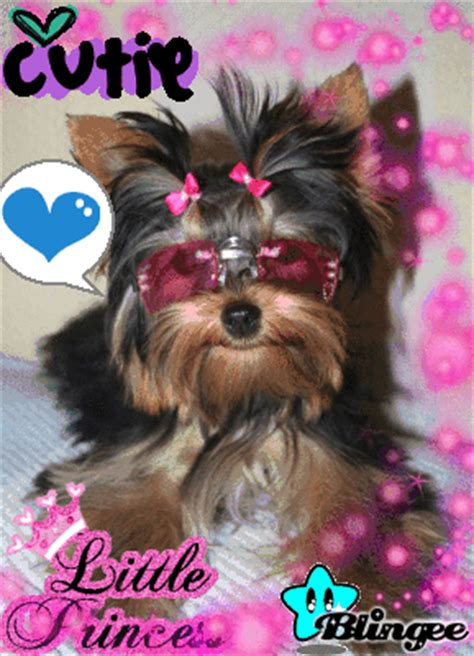 yorkie rate yorkie picture 119174241 blingee