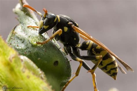 what is an order hymenoptera